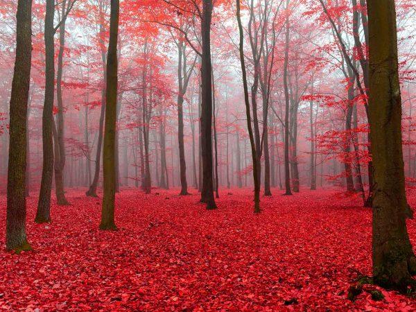 Alfombra PVC Bosque Rojo | Carteles XXL - Impresión carteleria publicitaria