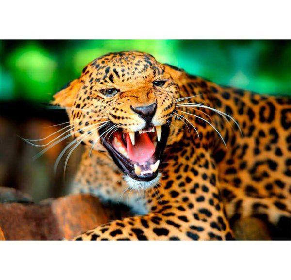 Fotomural Leopardo | Carteles XXL - Impresión carteleria publicitaria
