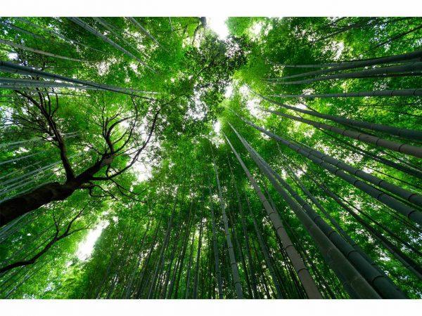 Vinilo Frigorífico Americano Bambú Asia | Carteles XXL - Impresión carteleria publicitaria