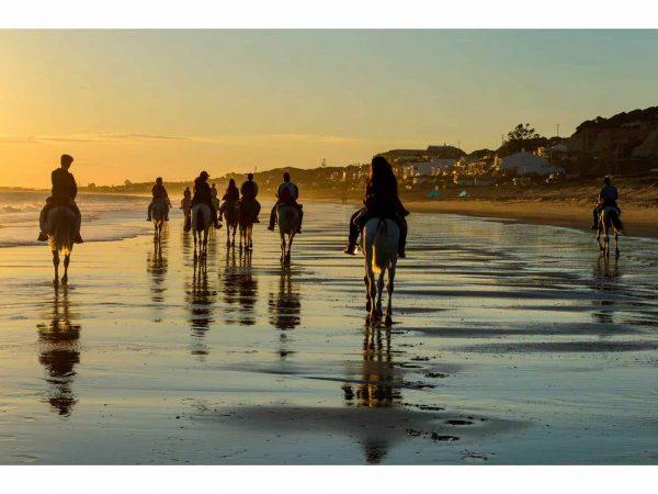 Vinilo Frigorífico Caballos Playa | Carteles XXL - Impresión carteleria publicitaria