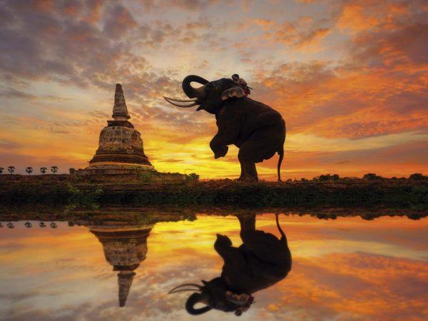 Vinilo Frigorífico Elefante Atardecer Tailandia | Carteles XXL - Impresión carteleria publicitaria