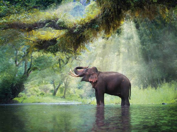 Vinilo Frigorífico Elefante en Bosque Tailandia | Carteles XXL - Impresión carteleria publicitaria