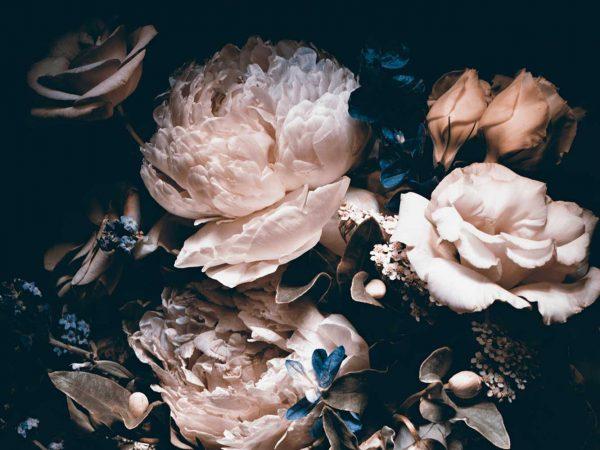 Fotomural Vinilo Floral Peonías rosas | Carteles XXL - Impresión carteleria publicitaria