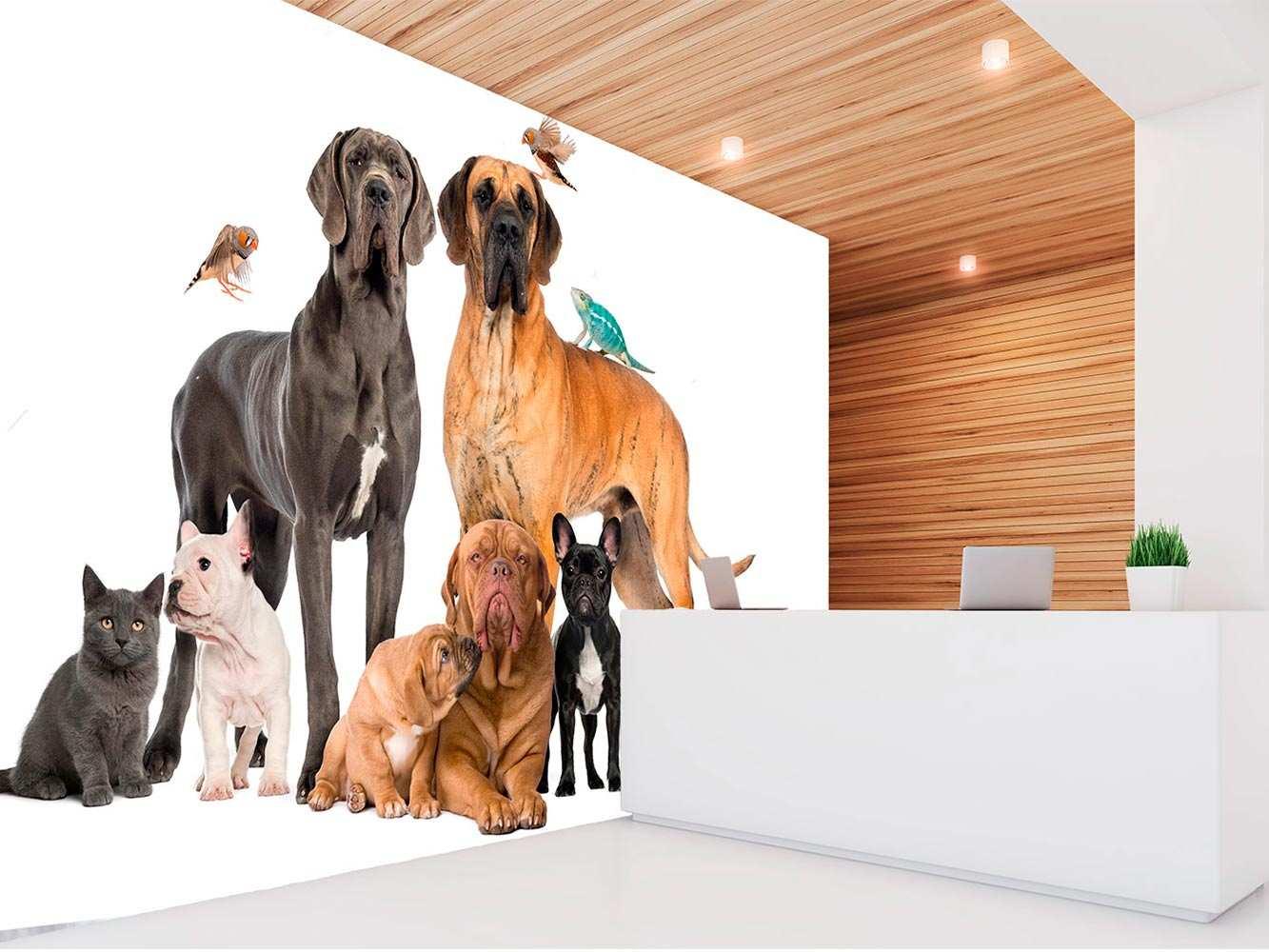 Fotomural Vinilo Perros Gatos y Pájaros   Carteles XXL - Impresión carteleria publicitaria