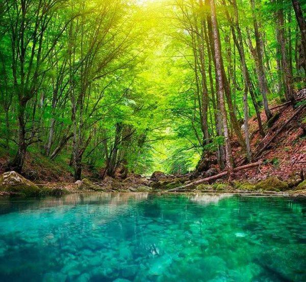 Moqueta Elegante Agua en Bosque   Carteles XXL - Impresión carteleria publicitaria