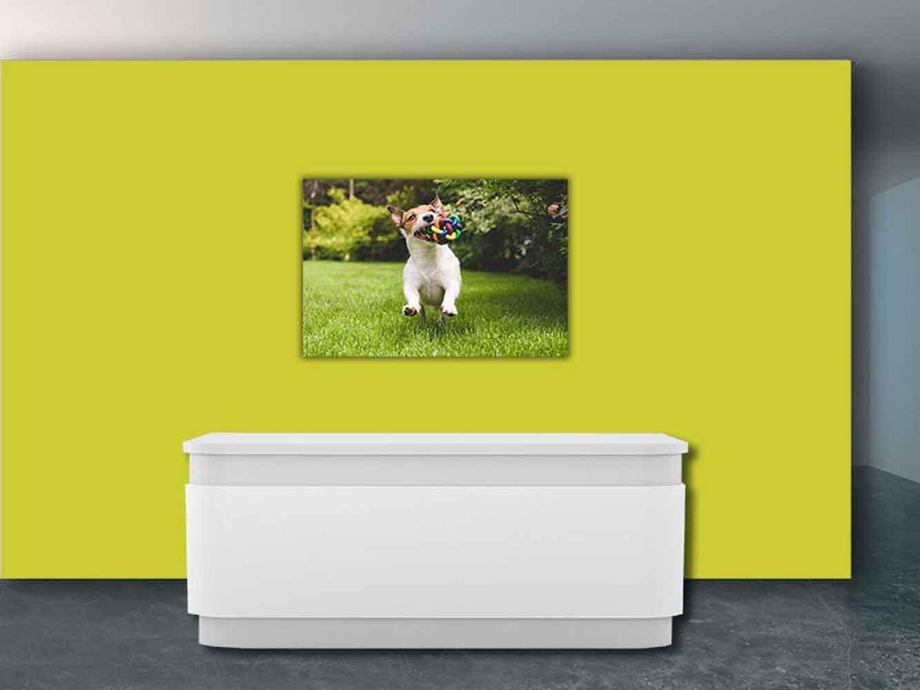 Fotomural Papel Pintado Perro y Juguete | Carteles XXL - Impresión carteleria publicitaria