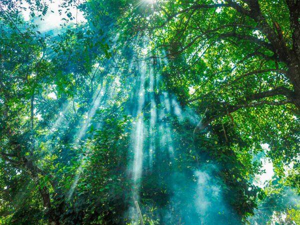 Vinilo Frigorífico Selva Iluminada   Carteles XXL - Impresión carteleria publicitaria