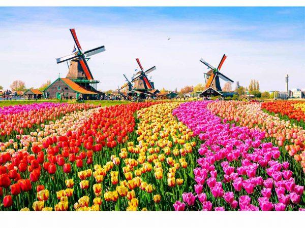 Vinilo Frigorífico Tulipanes Acuarela | Carteles XXL - Impresión carteleria publicitaria