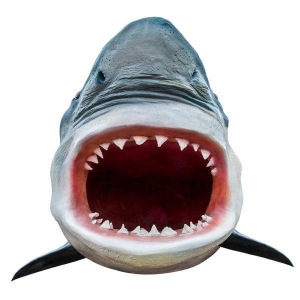 Vinilo Decorativo Tiburón | Carteles XXL - Impresión carteleria publicitaria