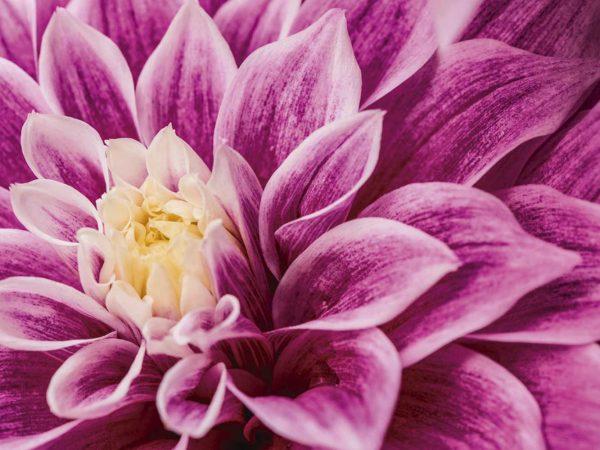 Vinilo Frigorífico Floral Morado | Carteles XXL - Impresión carteleria publicitaria