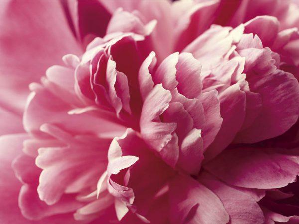 Vinilo Frigorífico Floral Rosa | Carteles XXL - Impresión carteleria publicitaria